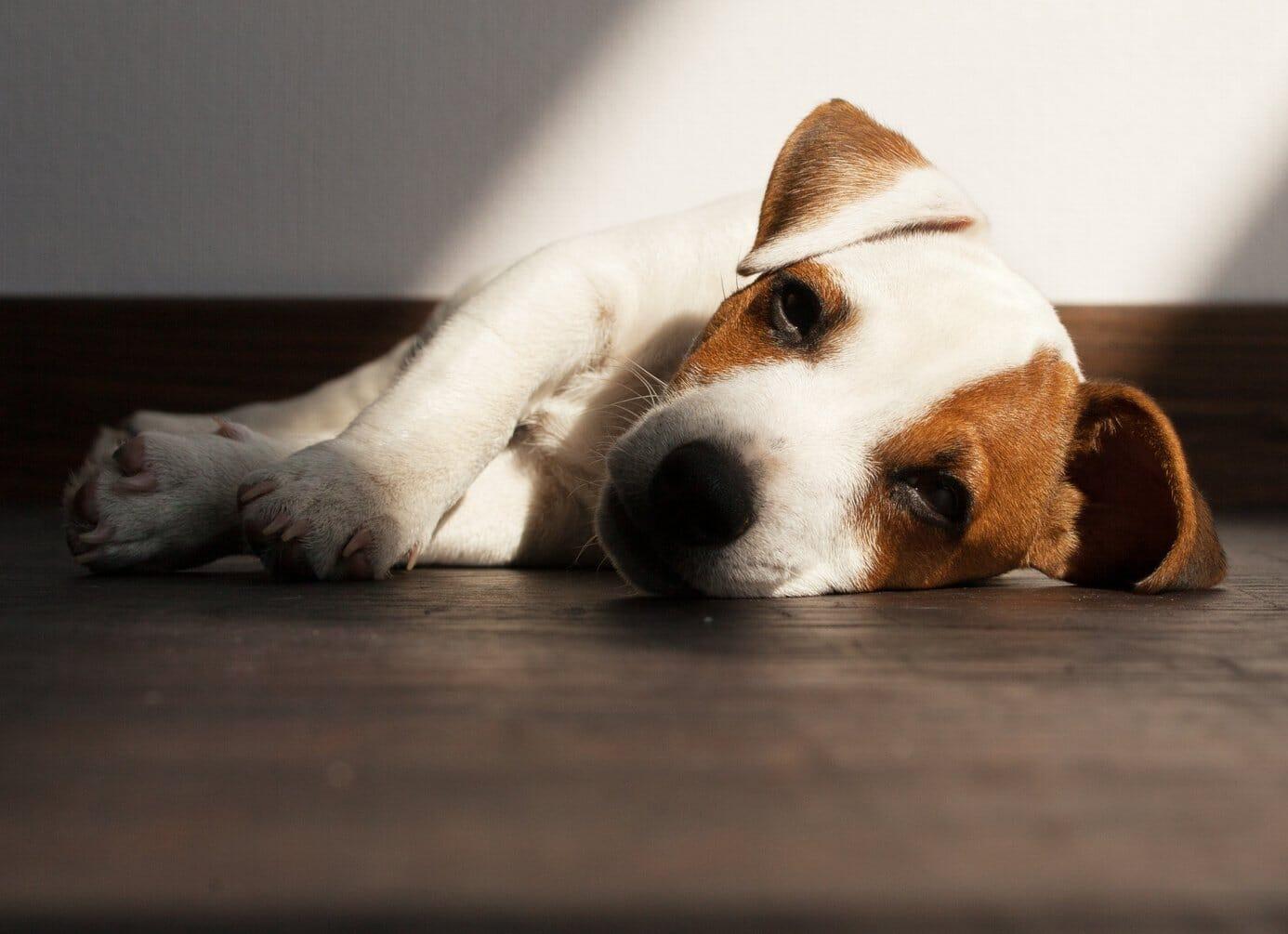 Hitzschlag Heimtiere - Hitzeschutz-Tipps